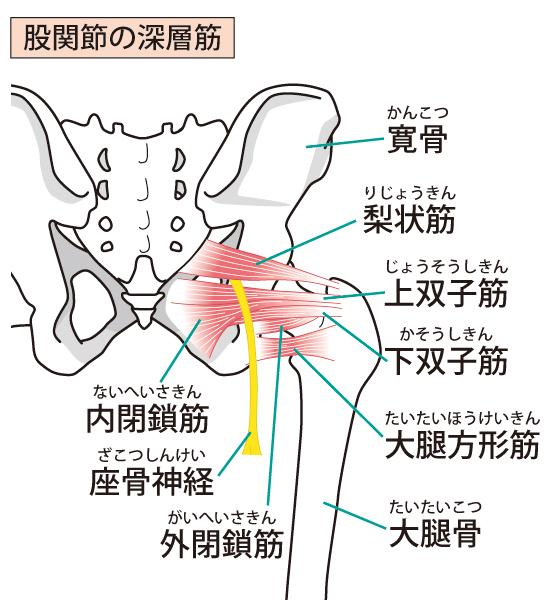 梨状筋を柔らかく整え症状を改善します